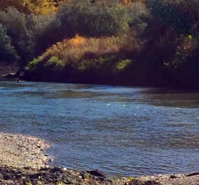 Musselshell River with Yellow Fall Tree Leaves