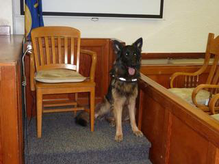 German Shepherd Pyper County Attorney Comfort Dog in Court