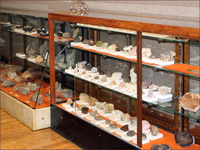 Montana Fossils on display